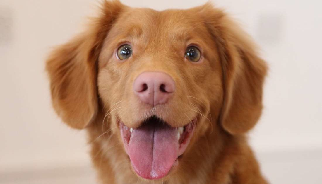 Tips To Remove Dog Smell From Your Home